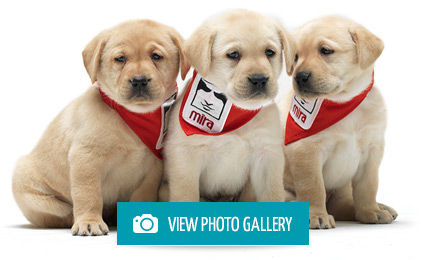 Lions Foundation Of Canada Guide Dogs